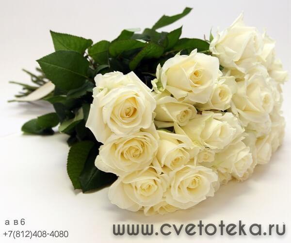 101 роза борисов цветы с доставкой